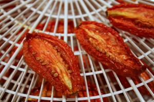drying tomatoes in the food dehydrator